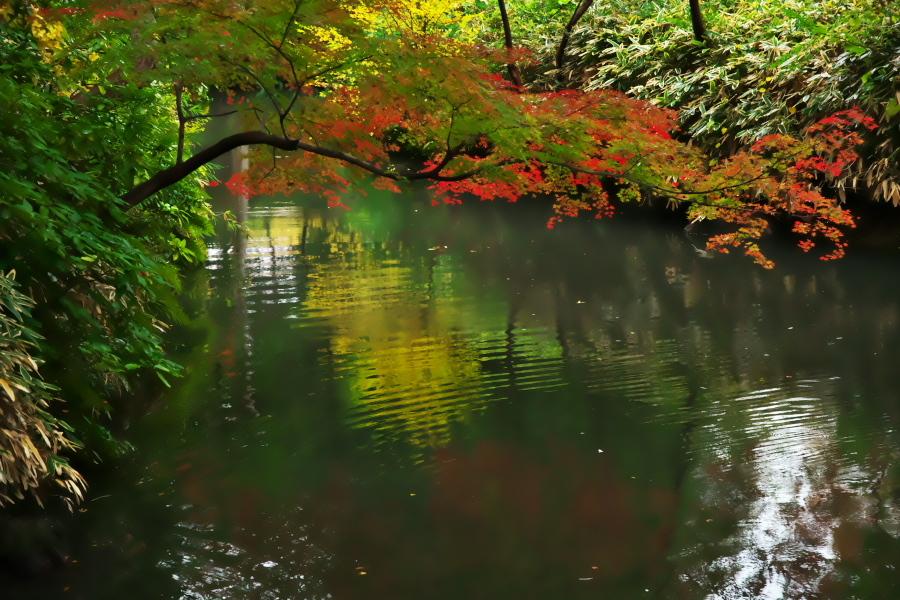 文京区 六義園の紅葉1_a0263109_20203923.jpg