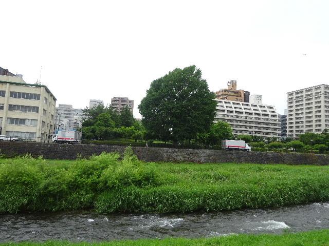 中津川の大銀杏_f0105112_05092566.jpg