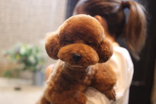 12月8日ご来店のワンちゃんです!!_b0130018_08480675.jpg