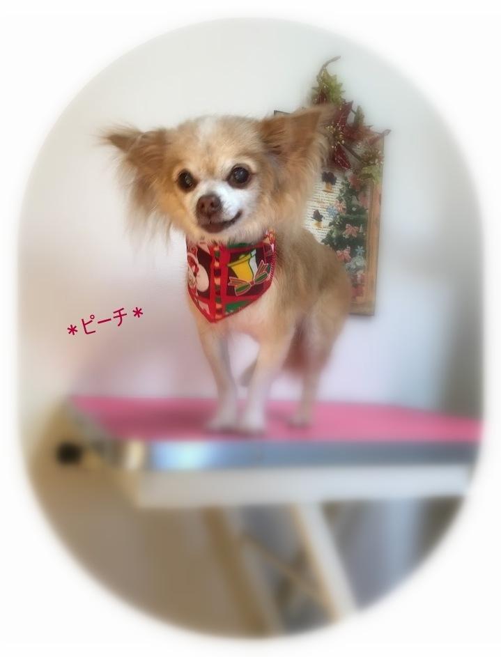 ピーチちゃん_a0315823_20205549.jpg