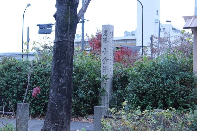 東京都国分寺~小金井公園内散策します。_a0214329_16563796.jpg