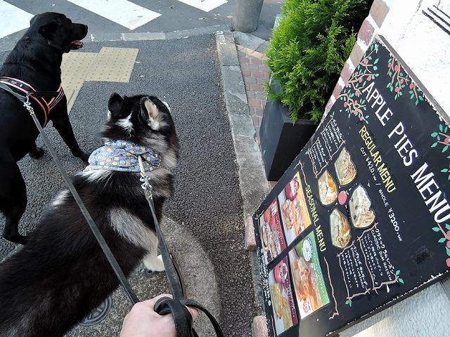 散歩屋日誌【26】_c0062832_15474970.jpg