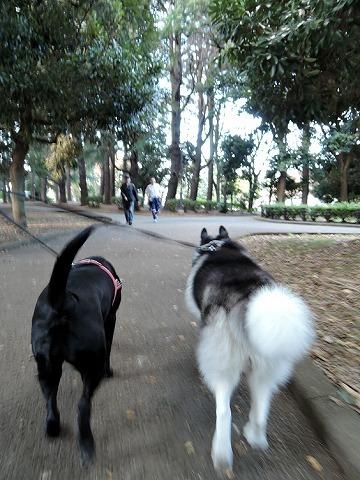 散歩屋日誌【26】_c0062832_15475202.jpg