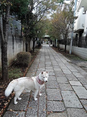 散歩屋日誌【26】_c0062832_15475378.jpg