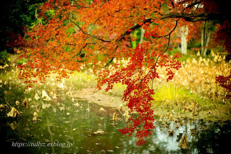 京都の秋2019(10)_d0108132_00463490.jpg