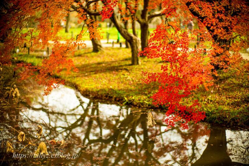 京都の秋2019(11)_d0108132_00530559.jpg