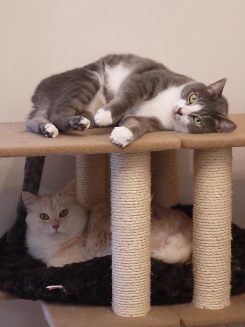 猫のお留守番 天ちゃん麦くん茶くん〇くんAoiちゃん編。_a0143140_22431752.jpg