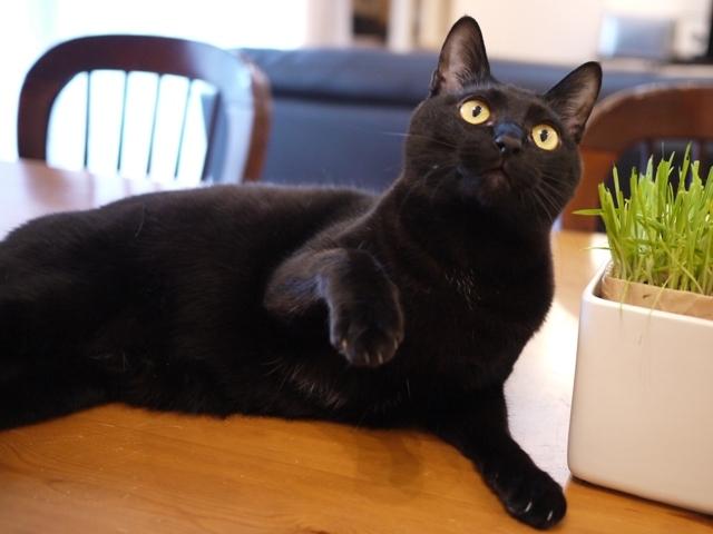 猫のお留守番 天ちゃん麦くん茶くん〇くんAoiちゃん編。_a0143140_22435587.jpg
