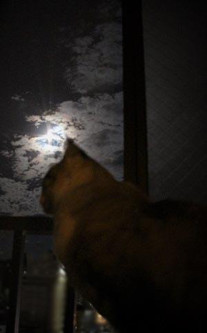 月光浴_a0333195_10050754.jpg