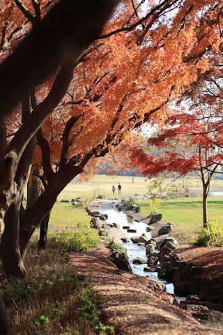今日は久しぶりに「水元公園」に♪_c0090198_20153765.jpg