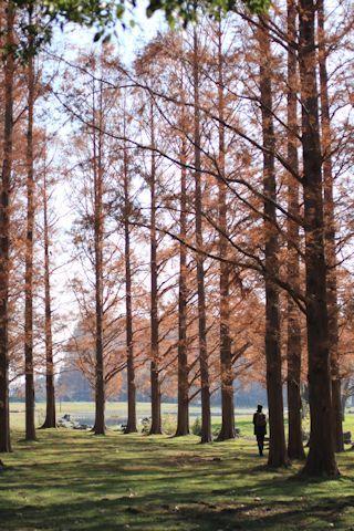今日は久しぶりに「水元公園」に♪_c0090198_20185292.jpg