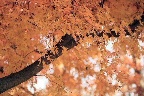 今日は久しぶりに「水元公園」に♪_c0090198_20213442.jpg