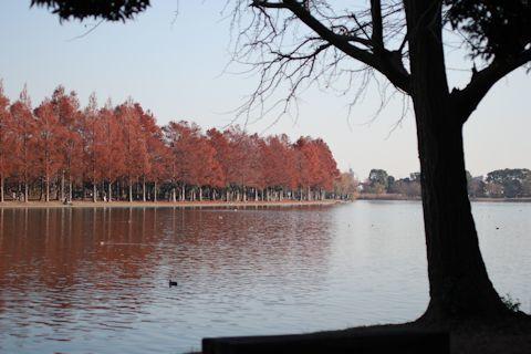 今日は久しぶりに「水元公園」に♪_c0090198_20341098.jpg