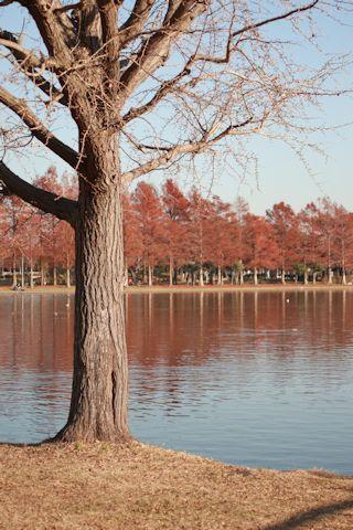 今日は久しぶりに「水元公園」に♪_c0090198_20344106.jpg