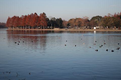 今日は久しぶりに「水元公園」に♪_c0090198_20353200.jpg