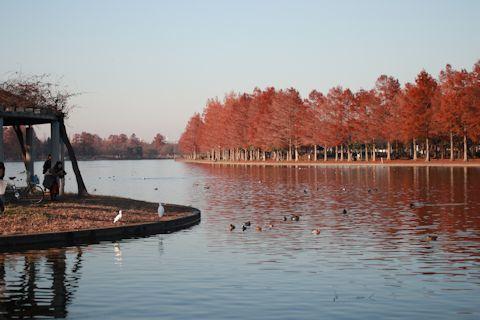 今日は久しぶりに「水元公園」に♪_c0090198_20504133.jpg