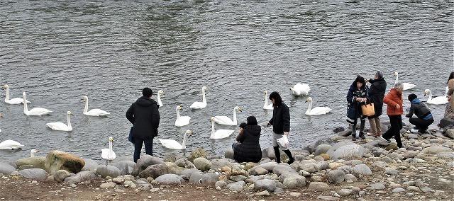 白鳥の郷公苑_b0163804_19105239.jpg