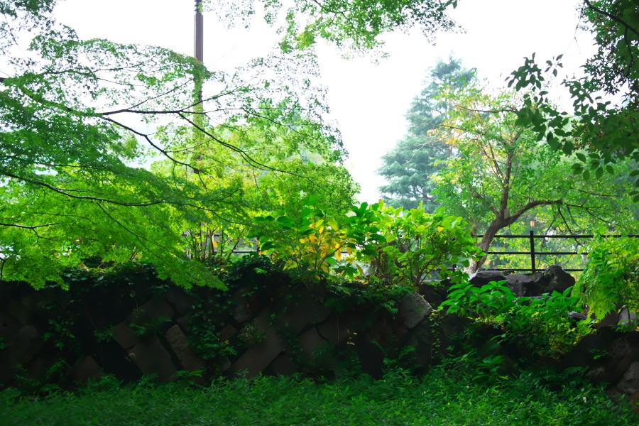日比谷公園の紅葉1_a0263109_22163009.jpg