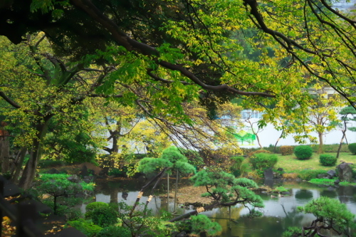 日比谷公園の紅葉1_a0263109_22163019.jpg
