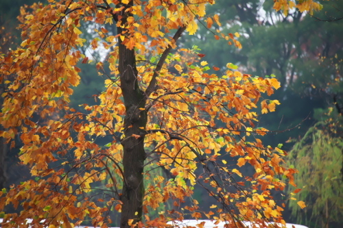 日比谷公園の紅葉1_a0263109_22163763.jpg