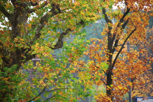 日比谷公園の紅葉1_a0263109_22163819.jpg