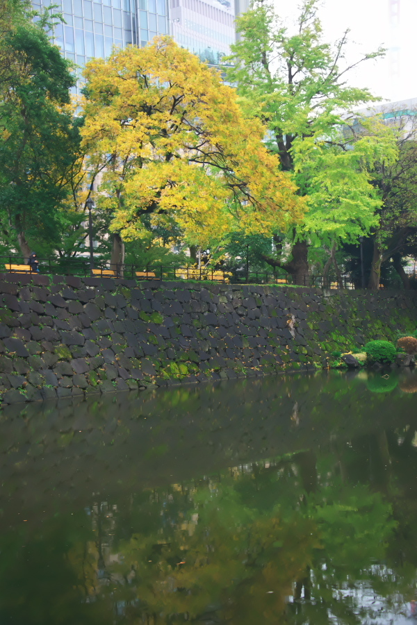 日比谷公園の紅葉1_a0263109_22163899.jpg