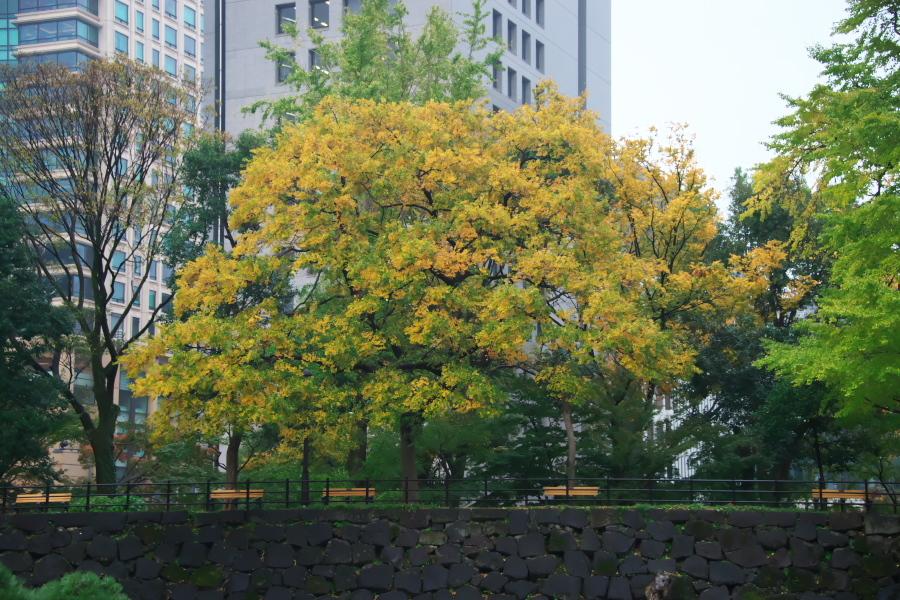 日比谷公園の紅葉1_a0263109_22163902.jpg