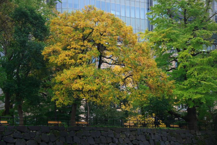 日比谷公園の紅葉1_a0263109_22163993.jpg