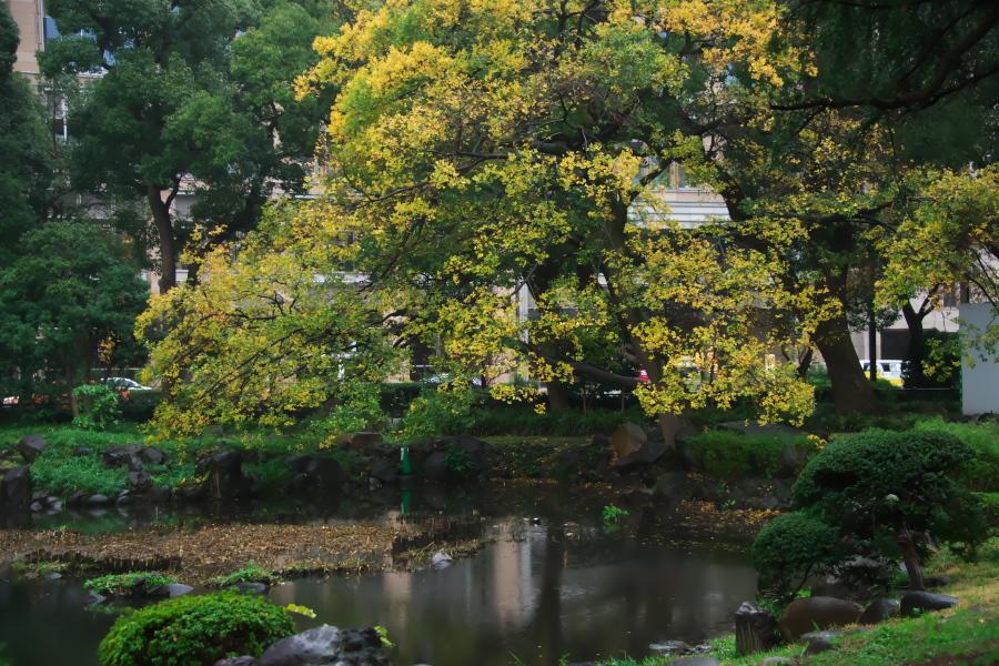 日比谷公園の紅葉1_a0263109_22173478.jpg