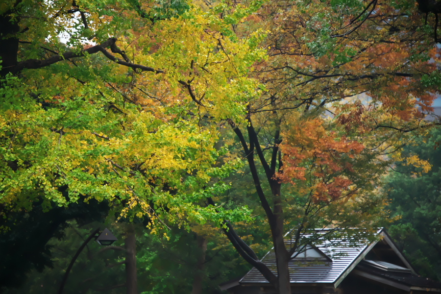 日比谷公園の紅葉1_a0263109_22181729.jpg