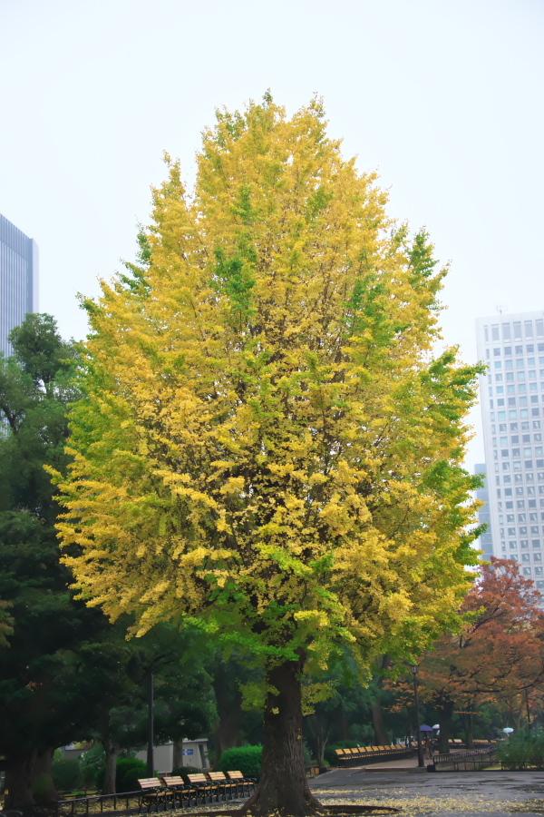 日比谷公園の紅葉1_a0263109_22182627.jpg