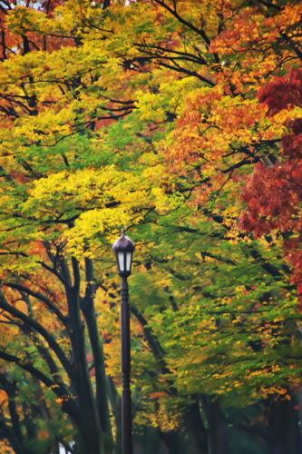 日比谷公園の紅葉1_a0263109_22183238.jpg