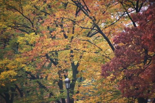 日比谷公園の紅葉1_a0263109_22183267.jpg
