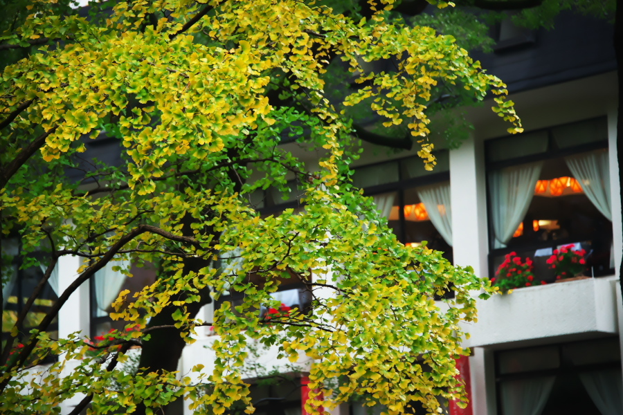 日比谷公園の紅葉1_a0263109_22183281.jpg
