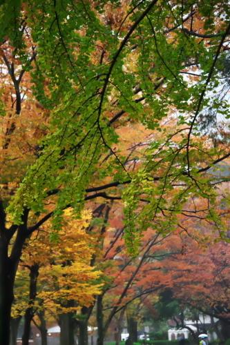 日比谷公園の紅葉1_a0263109_22183285.jpg