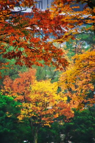 日比谷公園の紅葉2_a0263109_22210424.jpg
