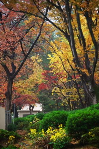 日比谷公園の紅葉2_a0263109_22210448.jpg