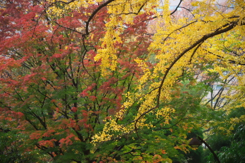 日比谷公園の紅葉2_a0263109_22211353.jpg