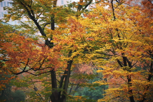 日比谷公園の紅葉2_a0263109_22212203.jpg