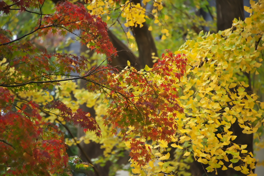 日比谷公園の紅葉2_a0263109_22212764.jpg