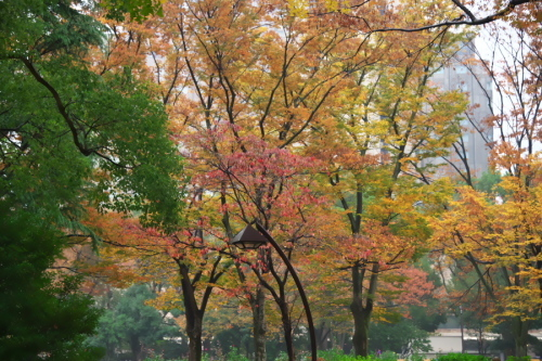 日比谷公園の紅葉2_a0263109_22221357.jpg