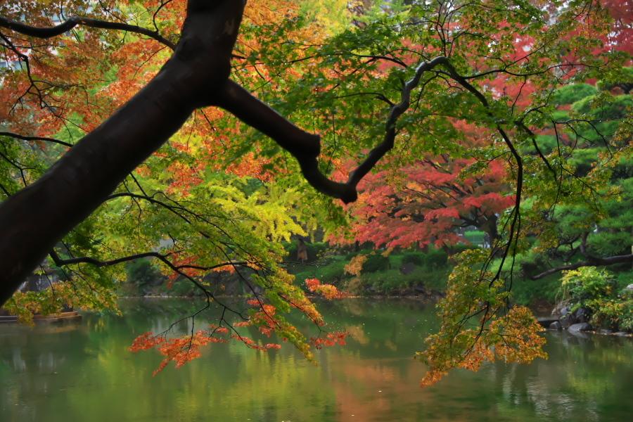 日比谷公園の紅葉2_a0263109_22221703.jpg