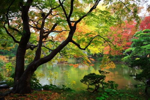 日比谷公園の紅葉2_a0263109_22221736.jpg