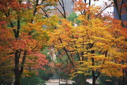 日比谷公園の紅葉2_a0263109_22221798.jpg