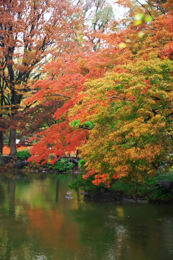 日比谷公園の紅葉2_a0263109_22221807.jpg