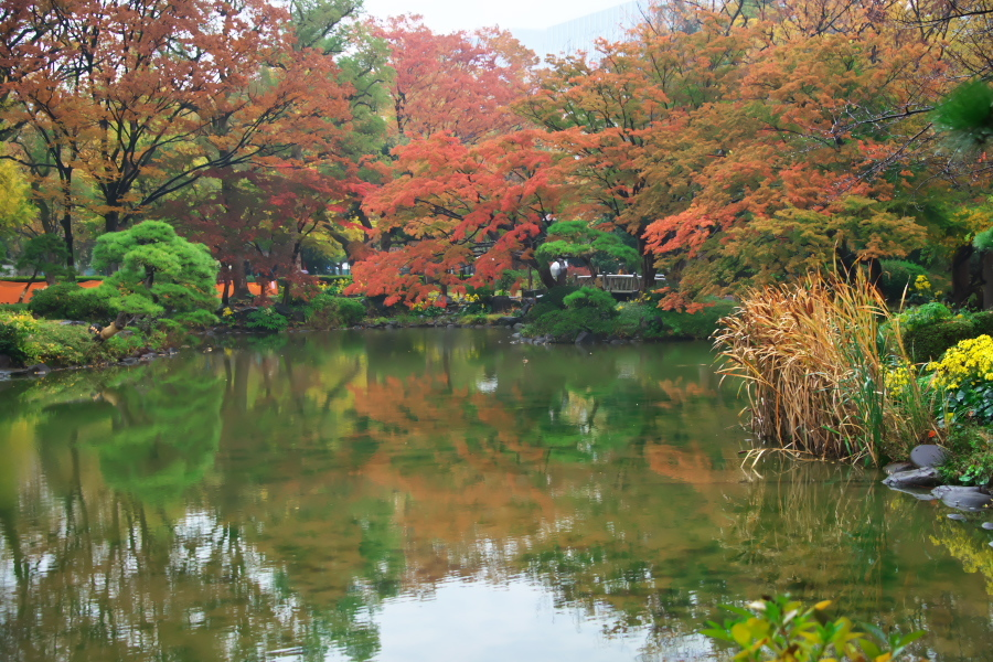 日比谷公園の紅葉2_a0263109_22222161.jpg