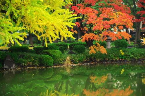 日比谷公園の紅葉2_a0263109_22222194.jpg