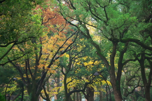 日比谷公園の紅葉2_a0263109_22222285.jpg