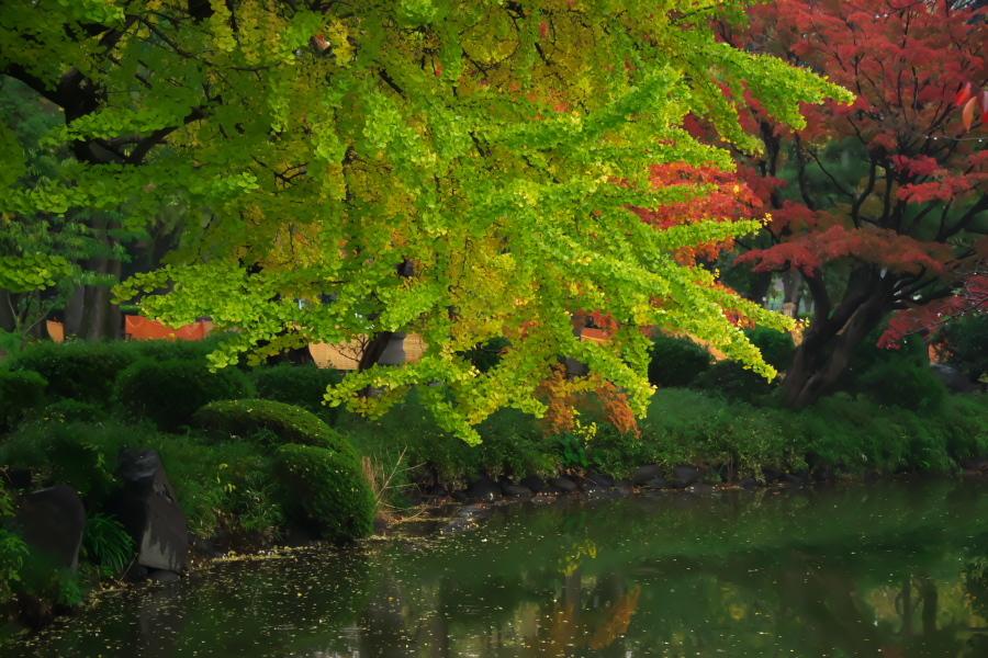 日比谷公園の紅葉2_a0263109_22225904.jpg