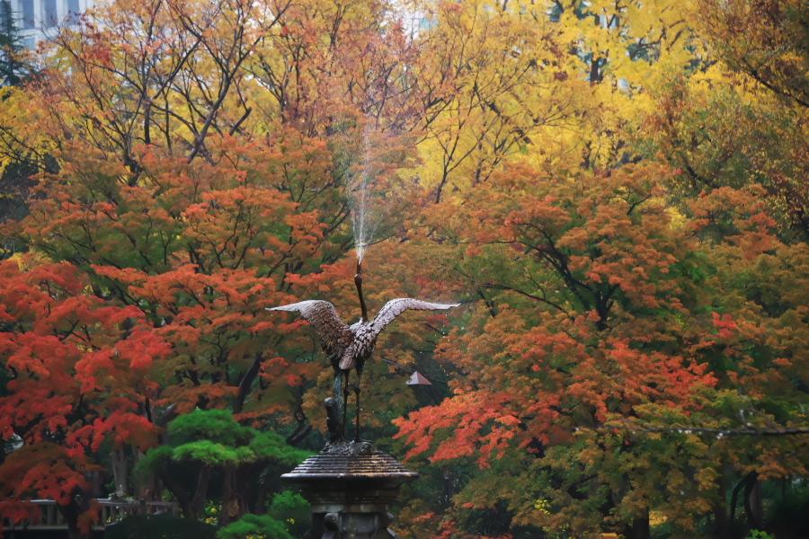 日比谷公園の紅葉2_a0263109_22225946.jpg